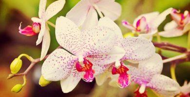 Como Cuidar Orquídeas Y Mantenerlas Bellas Por Mucho Tiempo