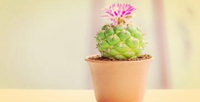Fabulosas Plantas De La Buena Suerte ¡No Deben Faltar En El Hogar!