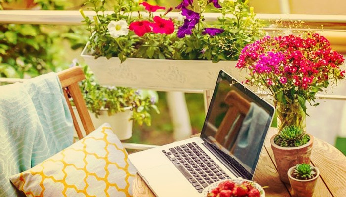 24 Plantas De Sol Muy Resistentes, Ideales Para Terrazas Y Balcones!