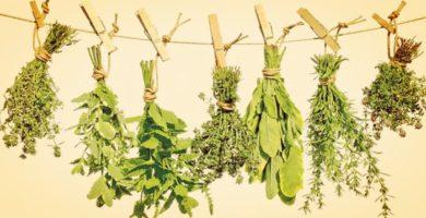 Más de 15 Plantas Naturales para Dormir que Seguro No Conocías!