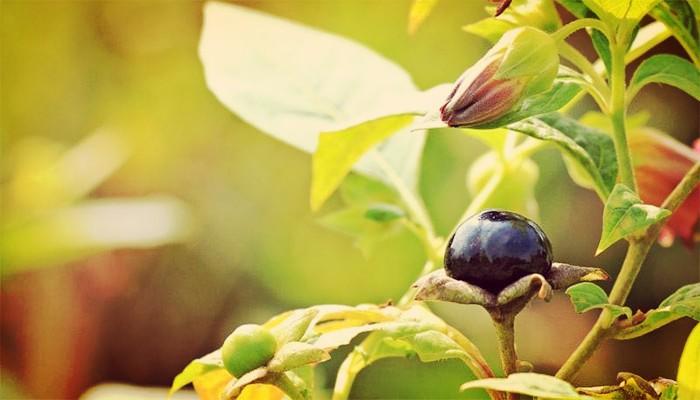 3 Plantas Venenosas De Jardín Que Seguro No Conocias