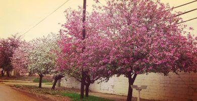 Arbol De Las Orquideas Perfecto Para Su Jardin Con Flores Bellas Y Aromaticas