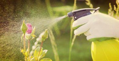 Cuida Tu Jardín Con estos Fabulosos Pesticidas Naturales ¡Sorprendentes!