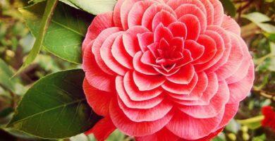 Conoce 10 Plantas Exóticas Y Muy Exuberantes Que Jamas Has Visto
