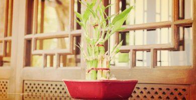 Numerosas Plantas Feng Shui Que Llenaran Tu Hogar De Buenas Vibras!