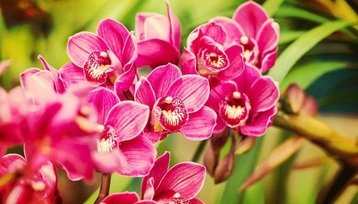 5 Tipos De Orquídeas Muy Hermosas Ideales Para Decorar Tu Hogar!