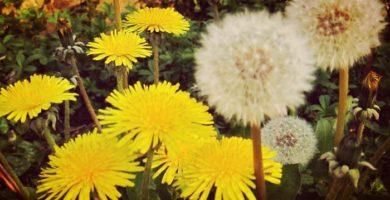 14 Tipos De Plantas Medicinales Que Seguro Tienes En Tu Dispensa