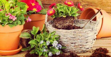 15 Hermosas Y Frutales Plantas Fáciles De Cultivar En Macetas