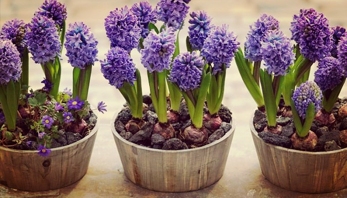 Las Más Lindas Plantas Florales Perfectas Para Terrazas E Interiores
