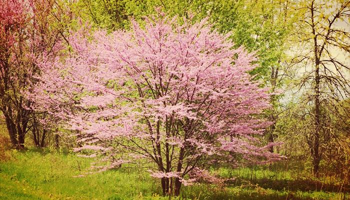Top 5 Arboles De Jardin Pequeños ¡Perfectos Para Decorar!
