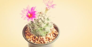 7 Espectaculares Cactus Con Flores Que Daran Un Toque Decorativo!