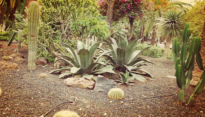 Como Plantar Semillas De Cactus Y Suculentas Correctamente