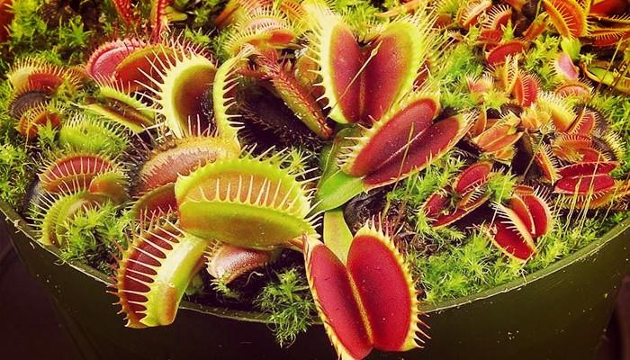 5 Plantas Carnívoras Muy Bellas Perfectas Para Jardines