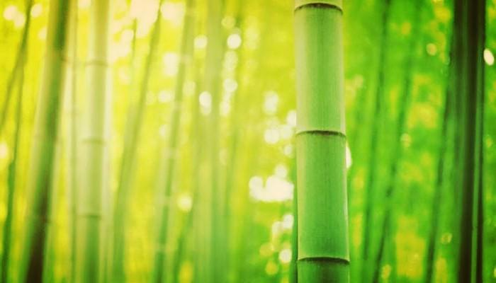 Árbol De Bambú :Origen, Tipos, Propiedades, Cuidados, Usos, Beneficios