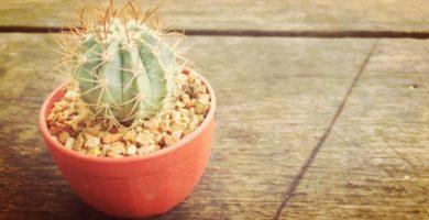 7 Curiosidades Y Consejos Sobre Cactus Que Debes Conocer!