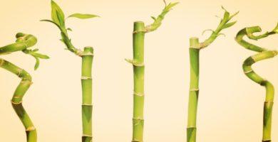 10 Plantas De La Suerte Que No Debe Faltar En Tu Sala O Jardín