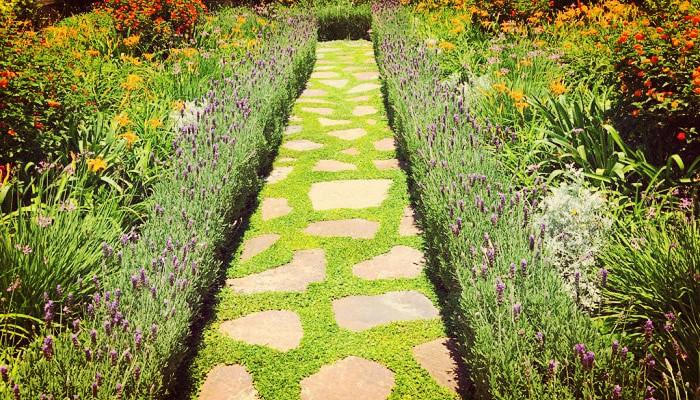Plantas Para Cerco De Jardin ¡Decora tus espacios con lo mas Ornamental!
