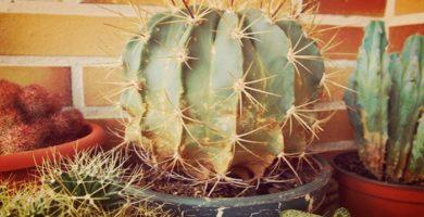Enfermedades Y Plagas De Cactus Y Suculentas ¡Guía Completa!