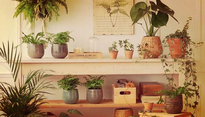 21 Plantas De Sombra Totalmente Resistentes Fáciles De Cuidar!