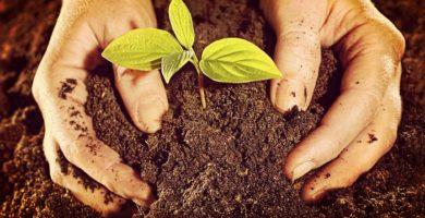 Abono Para Jardin - Fabulosa Guia Practica De Preparación