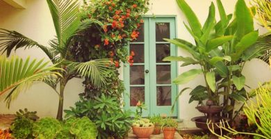 7 Bellas Plantas De Exterior Resistentes Para Jardines