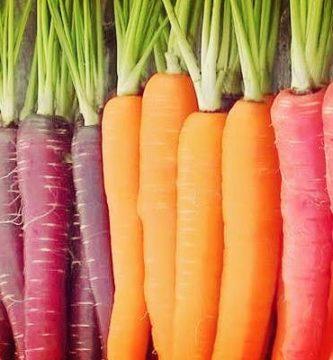 Zanahoria: Historia, Origen, Propiedades, Cultivo, Usos