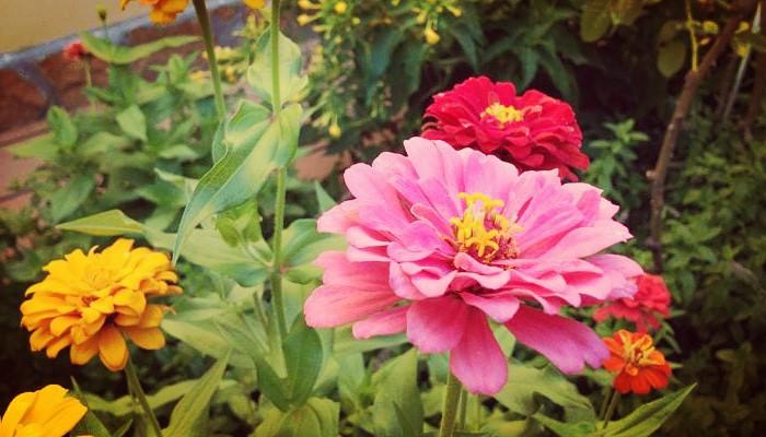 5 Aromáticas y Bellas Flores De Jardín - Para Un espacio Único Y Natural