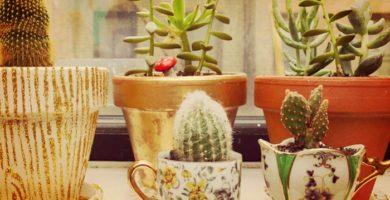 Como Cuidar Un Cactus | Técnicas, Aplicaciones Y Mas
