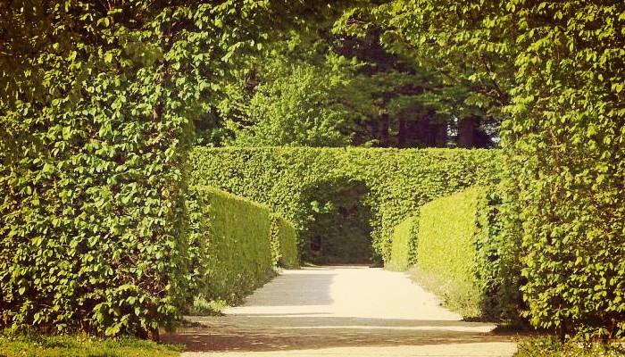 Plantas Para Cercos, Tipos, Características, Cuidados Y Más