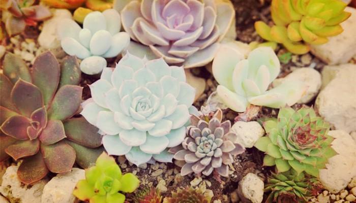 Plantas Suculentas | Significado, Características, Cuidados Y Más