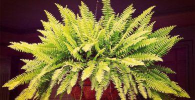 Top 10 De Las Mejores Plantas Sin Flores Y Sus Características