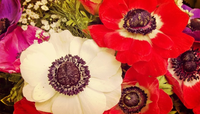 Que Es Una Flor. Descripción, Partes, Función, Tipos
