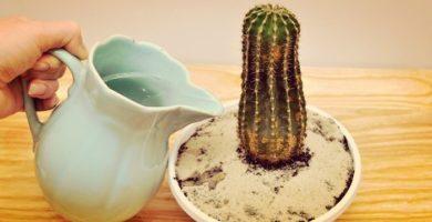 Cactus Cuidados Y Mantenimiento Básico. Lo Que Debes Hacer.