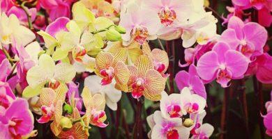 Orquídeas Significado. Descubre Lo Que Representa