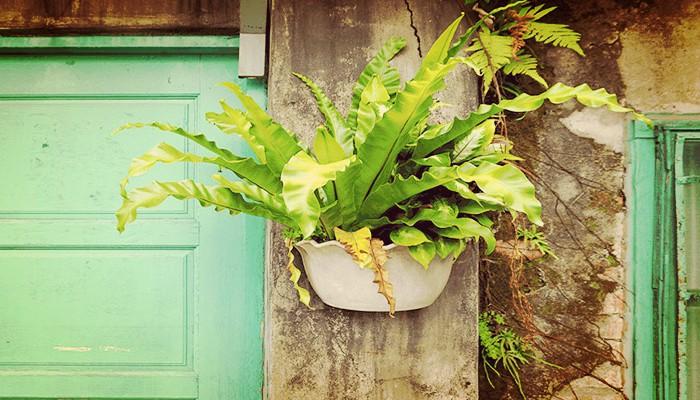 10 Tipos De Helechos Perfectos Para Tu Jardín O Terraza