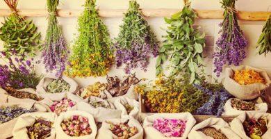 10 Plantas Medicinales Que Debes Tener En Tu Hogar