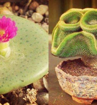 Top 10 De Cactus Raros Y Más Buscados Del Mundo