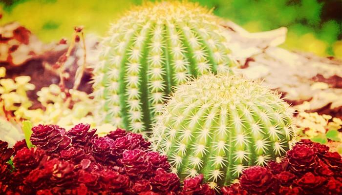 cactus significado