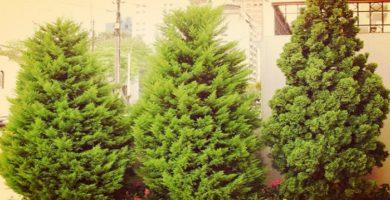Pino de navidad la opción perfecta para decorar tu hogar